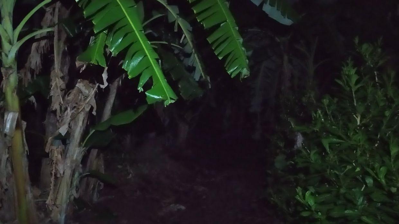 Satu asrama gempar insiden histeria dan muncul kelibat wanita dada berlubang gara-gara perbuatan pelajar lelaki di sebuah pokok pisang
