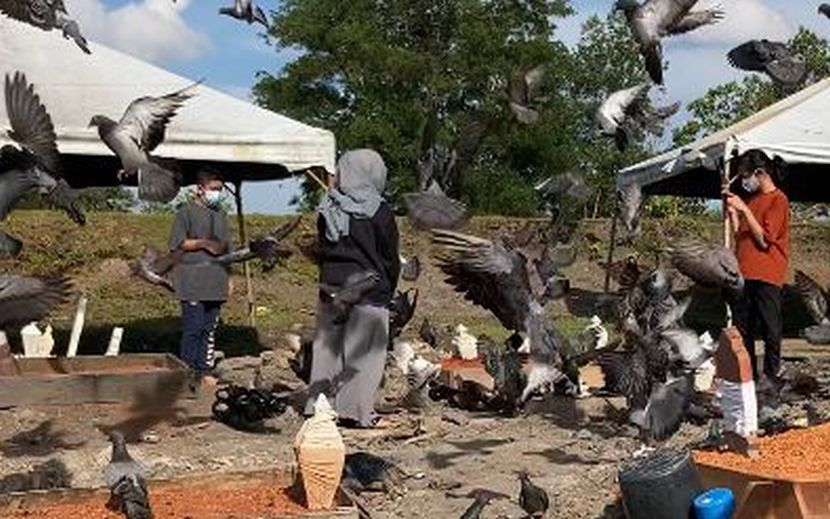 Kejadian pelik burung asyik kerumun pusara bapa terjawab! Penjaga kubur dedah satu rahsia yang ahli keluarga arwah tak pernah tahu